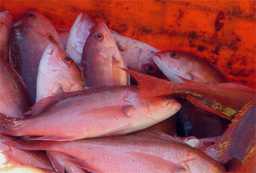 take your pick of super fresh fish