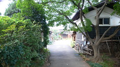 Zelkowa entrance