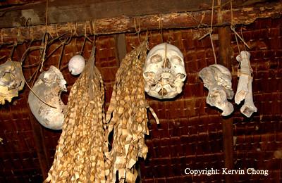 Skull-Display
