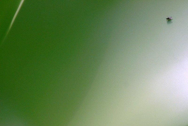mosca em plano verde