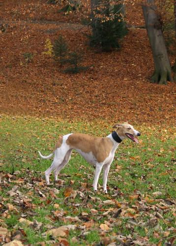 Nisha in park