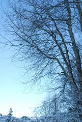 Snow DAY 015