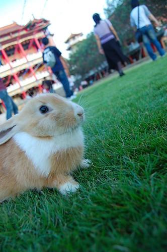 小兔(白)7