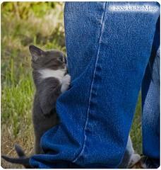 theGrayling climbs a leg