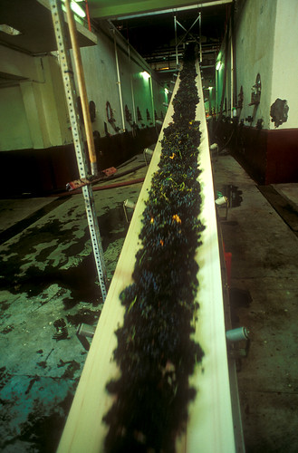 Conveyer Grapes