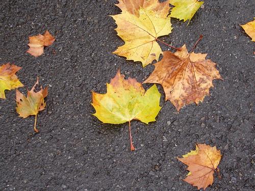 落ちた葉は、誰にも見向きされない…捨てられた子どもたちには、誰がいるのかしら…