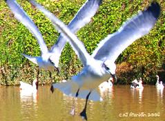 Untitled Gulls
