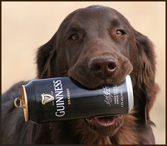 Anyone for Guinness? photo by Blazingstar