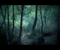 """Dusk Forest [Explore Front Page] photo by """"Tolgaahmetler P.""""♈"""
