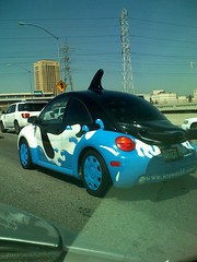 Shamu Bug photo by Ablirien