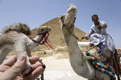 74_camel_4331 photo by michael_hughes