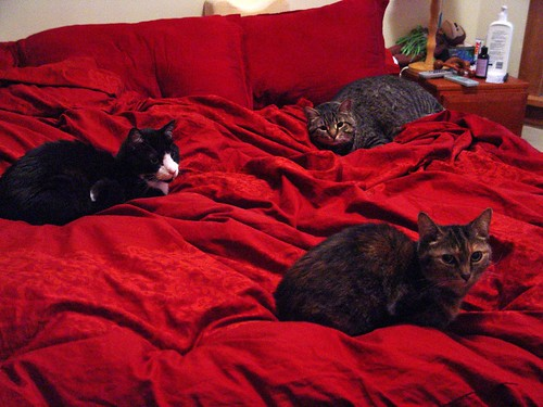 Three cats on a bed