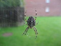 Spider - IXUS60