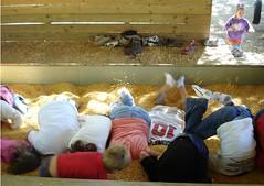 Corn ostriches