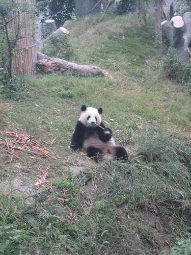 smoking_panda_1