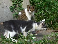 上野の猫#2