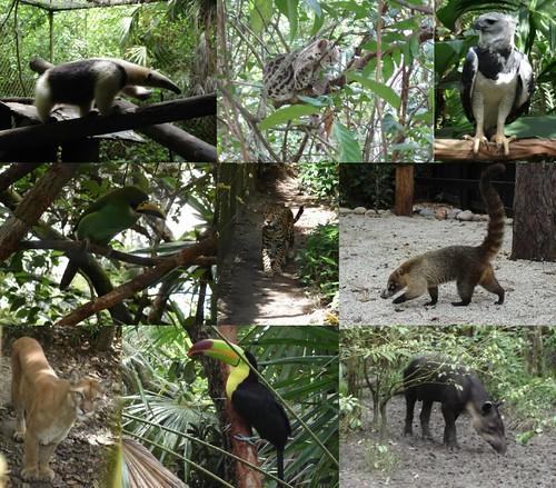 A few Belize Animals