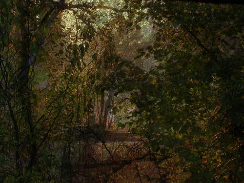 autumnal poem