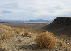 Nevada Roadside View