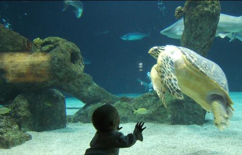 Joie at the Aquarium