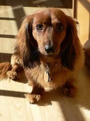 Polly, 11/24/2006