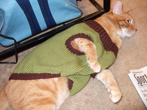Doggie Sweater on a Cat!