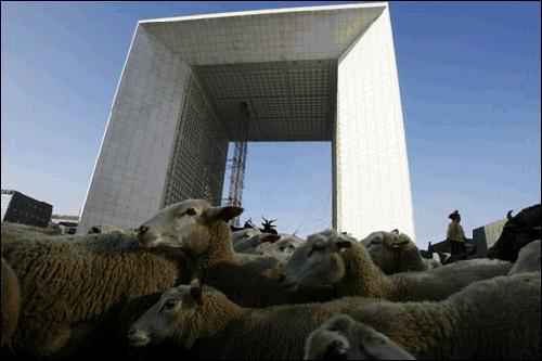 Moutons à la défense