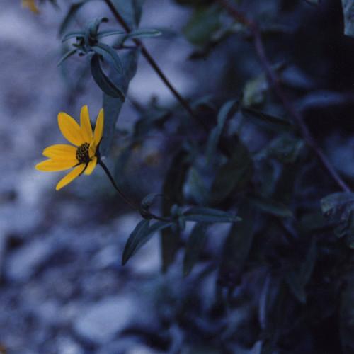 Stewart Falls, Provo Canyon, Utah  •  2000(?)