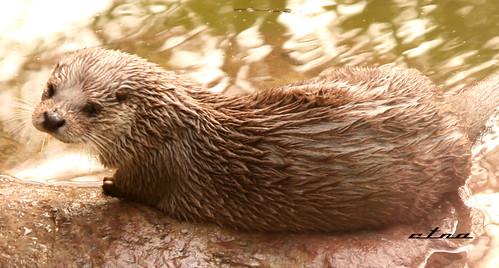 上海动物园一日游(多图)