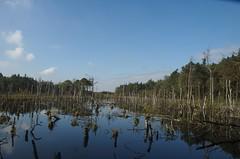 Moor und Waldgebiet bei Husum / Nienburg