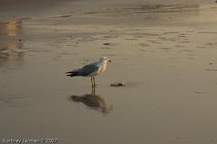 Myrtle Beach-8980