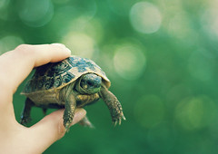 baby turtle photo by elise **