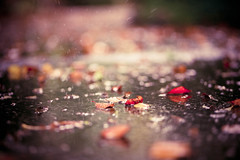 Fallen leaves with falling rain... (explore) photo by Olivia L'Estrange-Bell