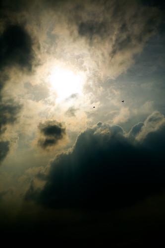 Zwei Vögel fliegen in die Sonne