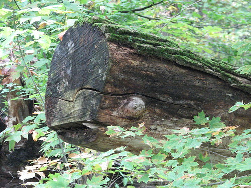 Moby Log