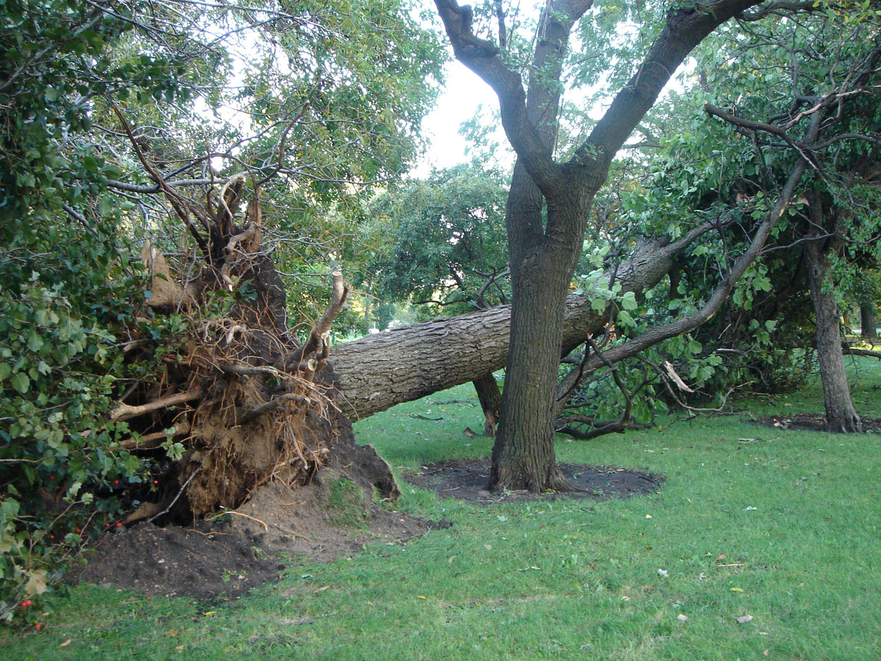 jackson-park-storm-3