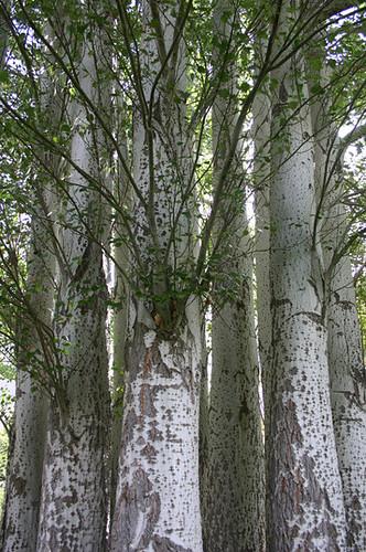 Soviet Trees