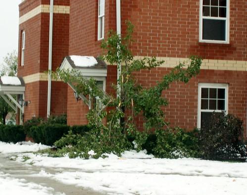 poor tree :(