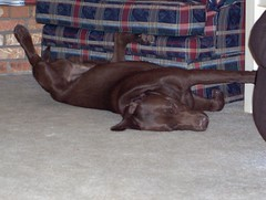 sleepin below mom's chair