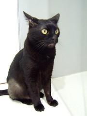blinky-cat
