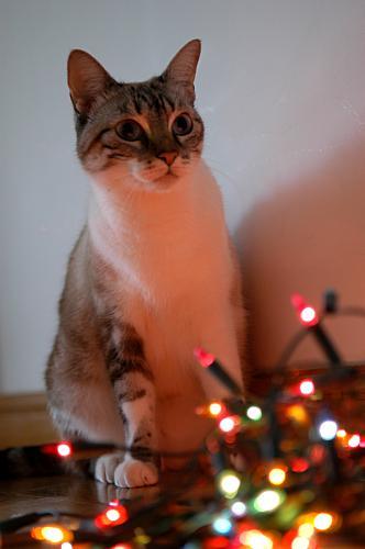 Árvore de Natal Pisca