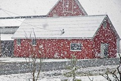 firstSnow-barn