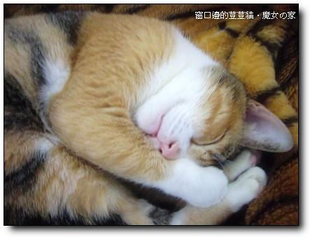 窗口邊的荳荳貓02