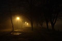 Foggy photo by raindog
