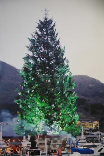 金森倉庫附近 Xmas tree