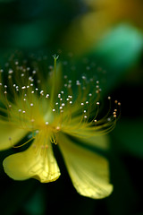 Yellow*Green photo by yoshiko314