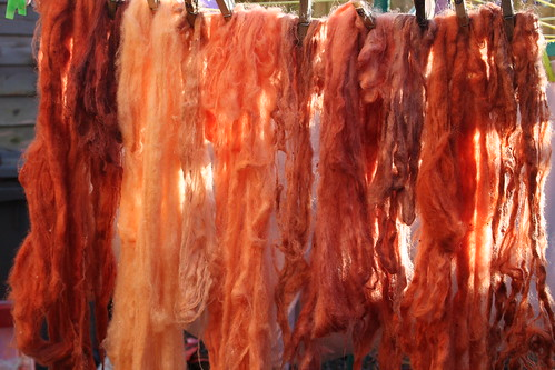 Madder - Natural Dyeing