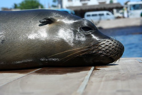 Sea Lion on the Dock