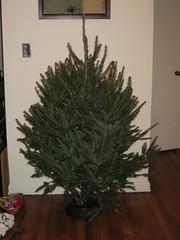 naked tree!