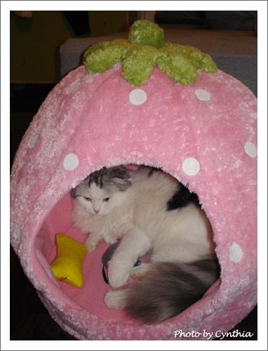 小綠愛貓草之1